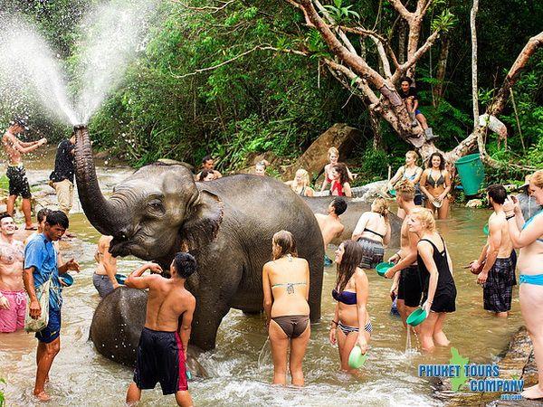 Phuket Elephant Sanctuary Phuket Thailand