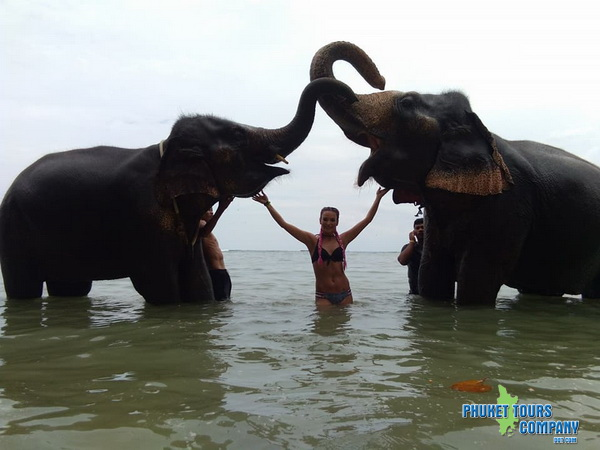 Phuket Elephant Swim in Sea Tour 2 Hour