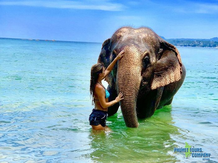 Phuket Elephant on Beach